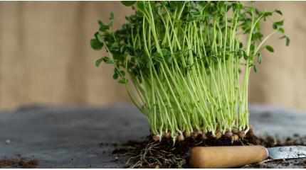 Пророщування і стимуляція насіння. Найбільш ефективні добрива для пророщування насіння. Захист від заморозків.
